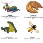 Google地球日活動意外回歸! 測出你是哪一種動物?