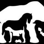 國外可信度90%心測 第一眼見到什麼動物?測你的內在個性與天賦特質
