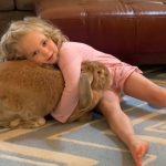 小女孩想養寵物 實現心願竟意外養成9公斤「巨無霸兔兔」