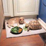 橘貓耐心陪好友「龜速吃飯」等到睡著 網笑:吃太久了啦!