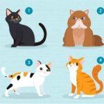 日本爆紅心理測驗!喜歡哪隻貓?測「最適合你的另一半」