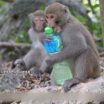壽山公園拍短片 宣導「猴諧和諧」