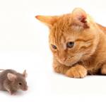 心理測驗/老鼠碰上貓被玩還是弄死?測驗你的同情心如何引發