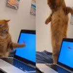 橘貓看見螢幕內金魚好開心 扭腰擺臀網笑:學魚游泳?